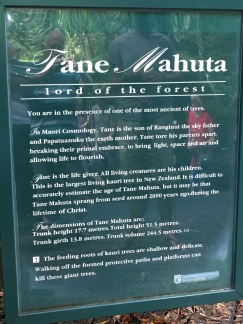 PANTAIA-NOUVELLE-ZELANDE-NORTHLAND-WAIPOUA-FOREST2